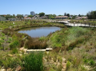 Wangal Park - pond and vegetated wetland